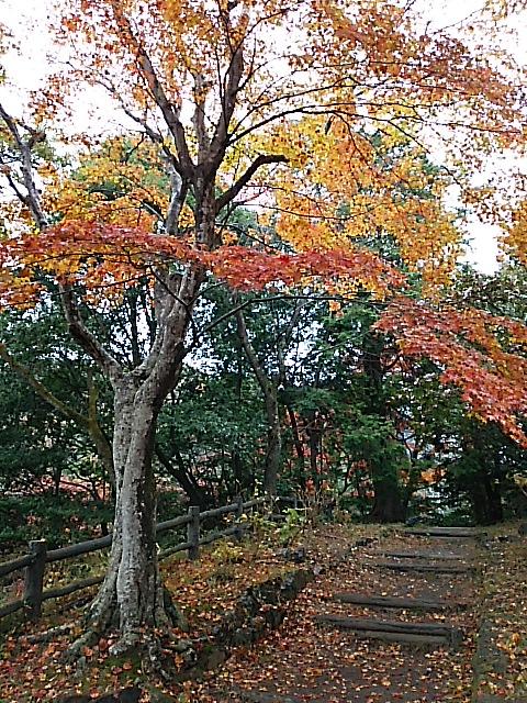 さようなら紅葉が美しい太平山