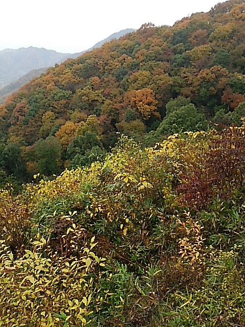 紅葉が美しい太平山