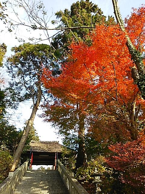神奈川県中郡二宮町の風景