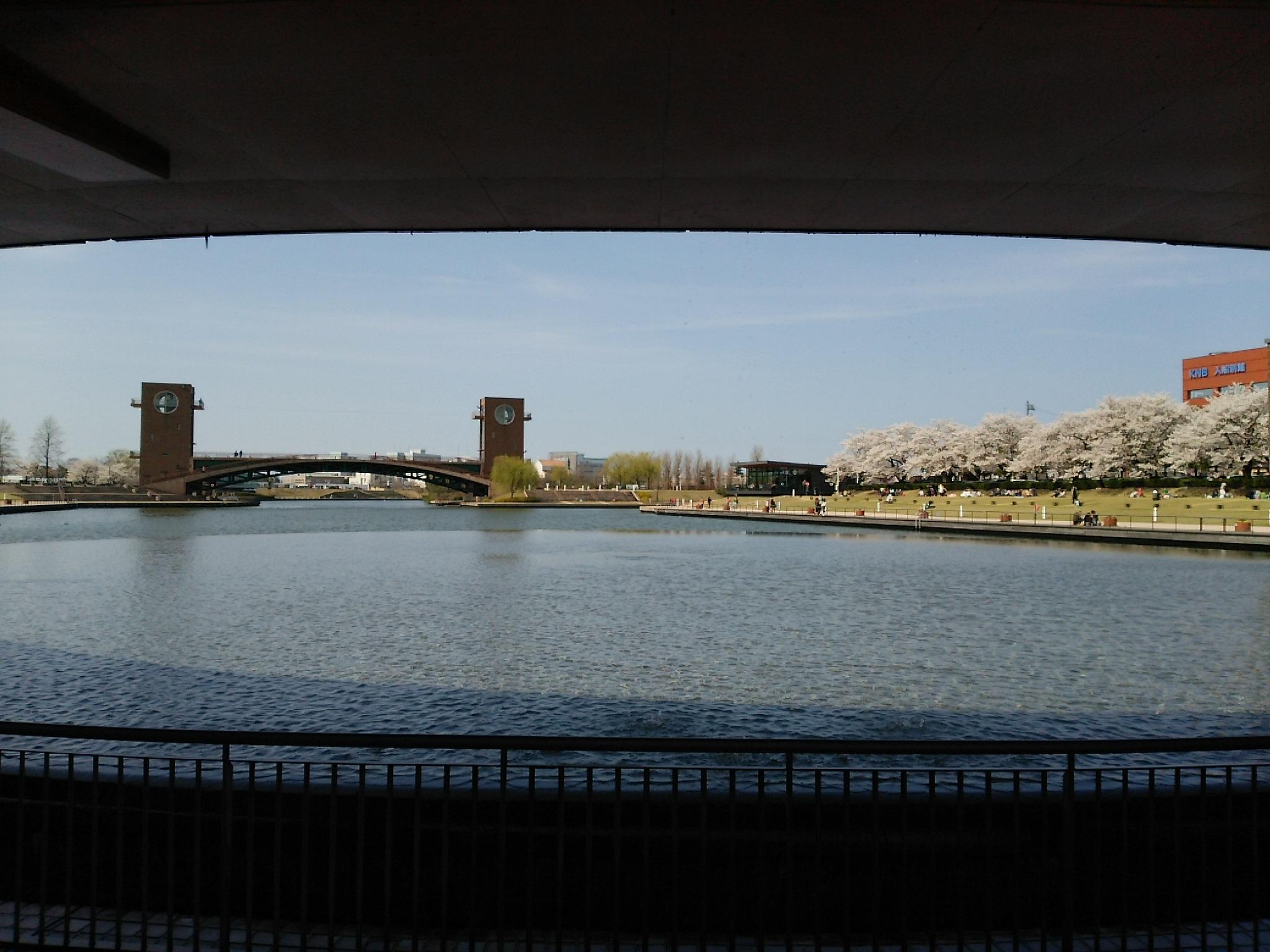 満開の桜、富岩運河環水公園