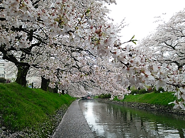 さようなら春の富山県富山市