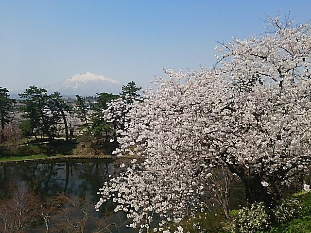 桜が満開の『心の故郷・青森県弘前市』へ