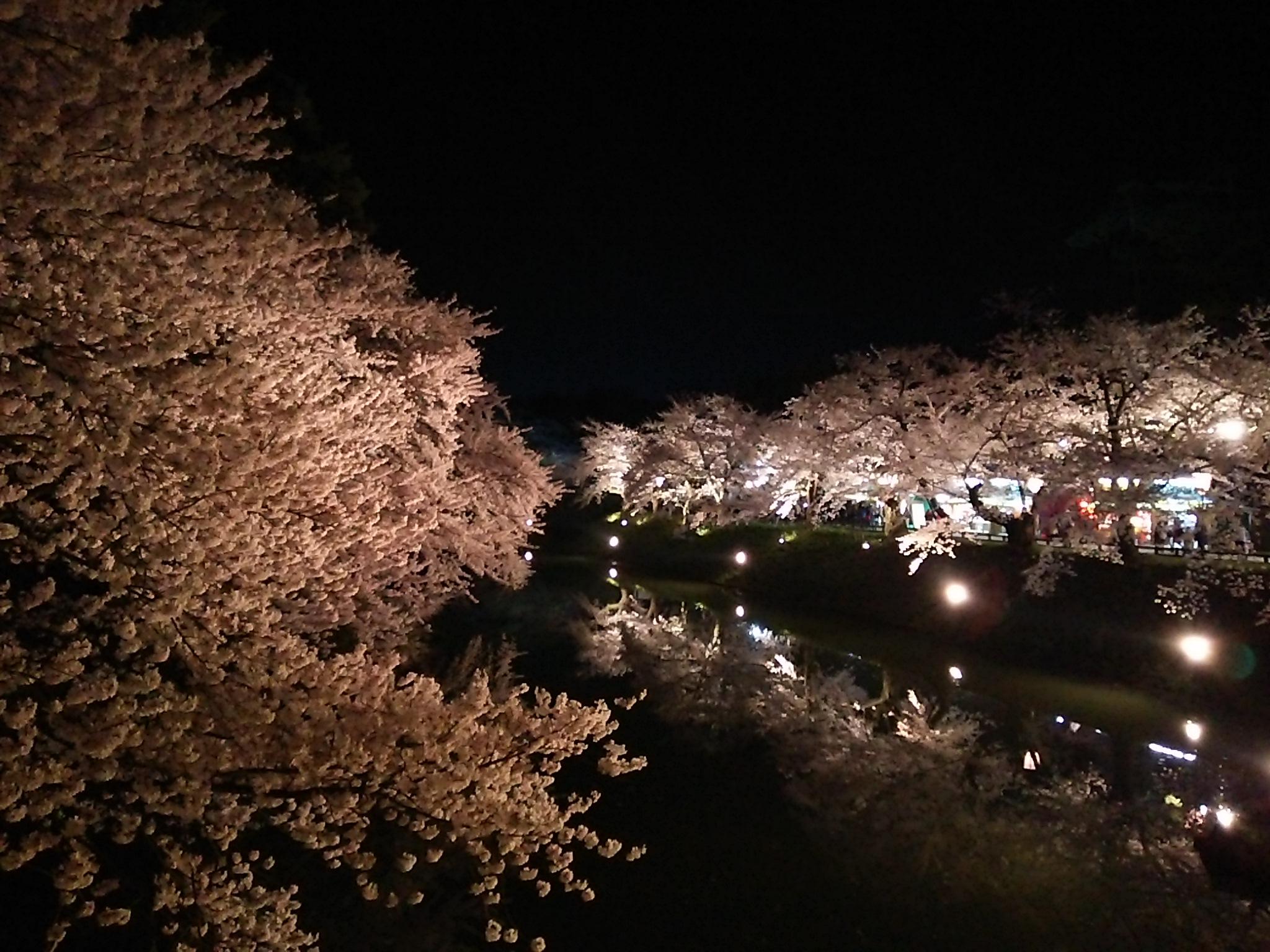 日本一美しい夜桜、桜が満開の弘前公園『弘前さくらまつり』