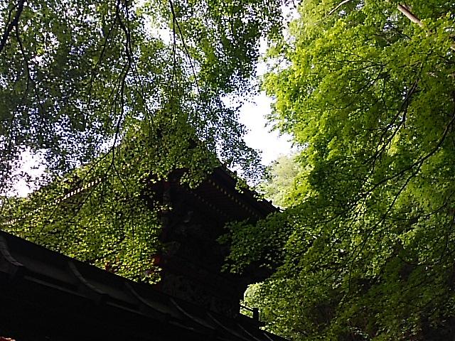 さようなら新緑が美しい初夏の高尾山