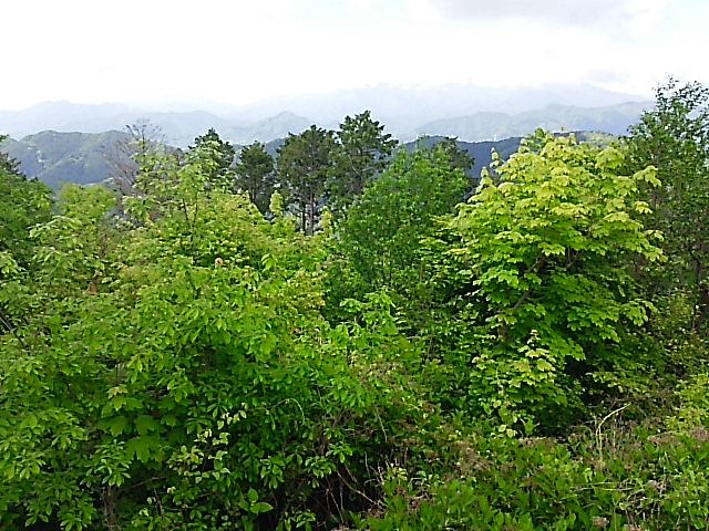 初夏、新緑の高尾山の風景